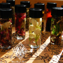 Alchemist Tree – Ritual Spell Oils for Mind, Body & Magic